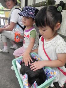 とくしま動物園にて 堂々と触れずこっそり触る男子