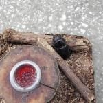 越冬2回したオオクワガタのメス