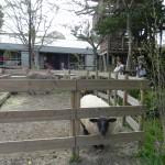 鹿児島の菖蒲学園に行ってきました