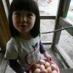 鶏が若返ったので卵がたくさん!