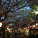 西小山の桜